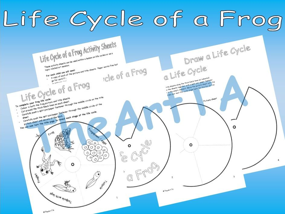 Frog Life Cycle printable activity