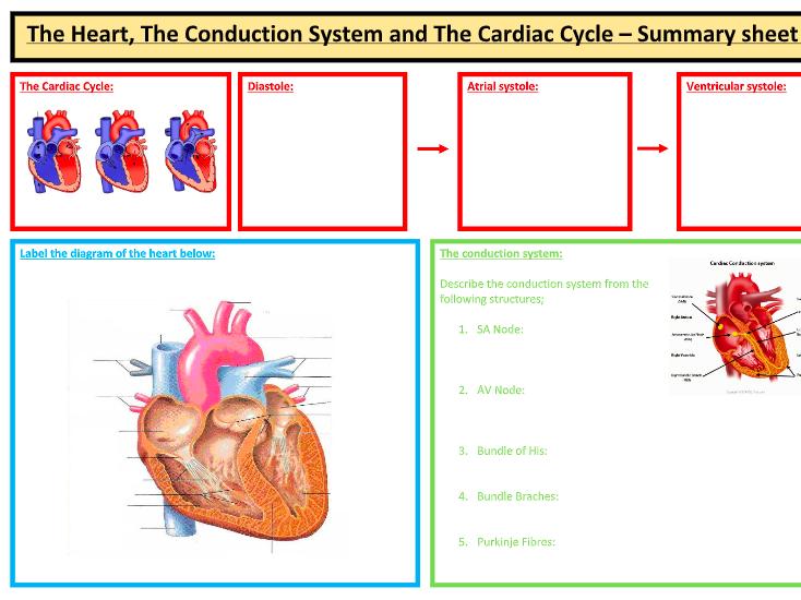 A-Level PE: Cardiovascular Syst. Summary Sheet