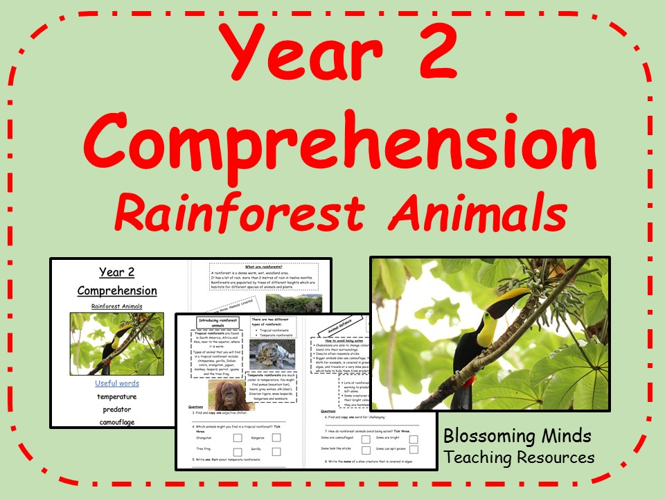 Year 2 SATs comprehension - rainforest animals