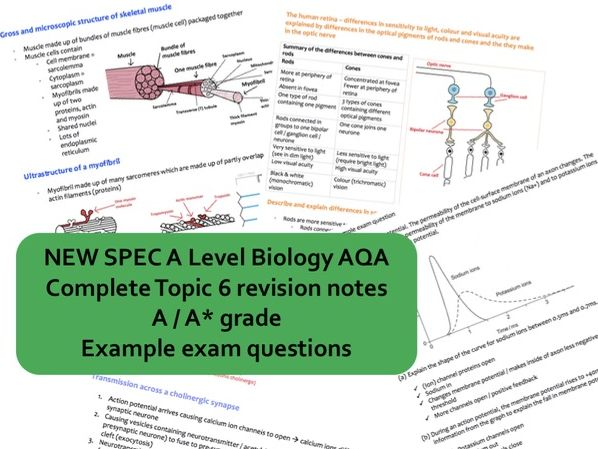 CONCISE A* A Level Biology AQA Topic 6 (stimuli, nervous coordination, homeostasis, etc.) notes