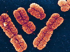 Edexcel GCSE Biology Topic 3: Genetics