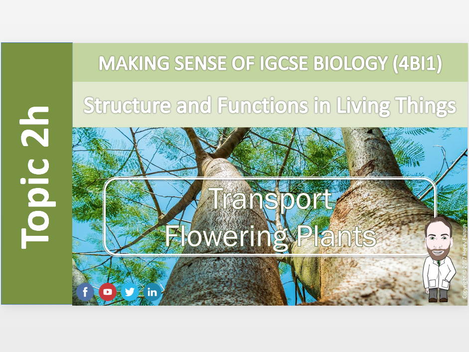 IGCSE Biology 9-1 - 2h Transport - Flowering Plants