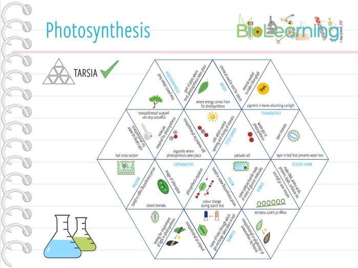 Photosynthesis - Tarsia (KS3/4)