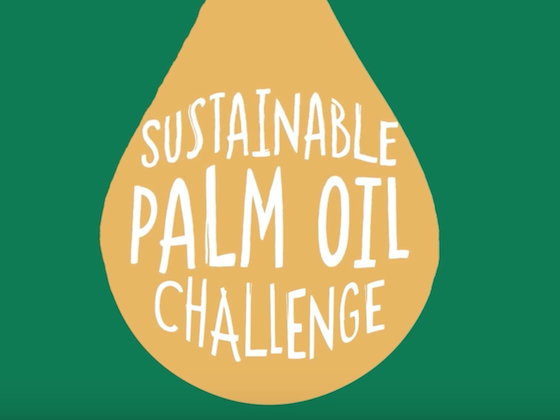 Learn at Chester Zoo - Palm Oil Perspectives - Plantations