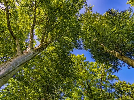 2 Nature Poems - trees + rivers (by author, published)