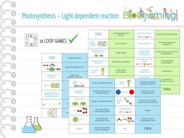 Photosynthesis: Light-dependent reaction - 2x Loop Games (KS5)