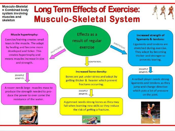GCSE PE Edexcel (9-1) Revision Flashcards: Physical Training