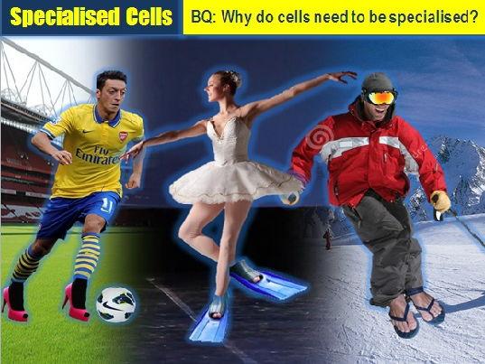 Specialised cells AQA GCSE Biology