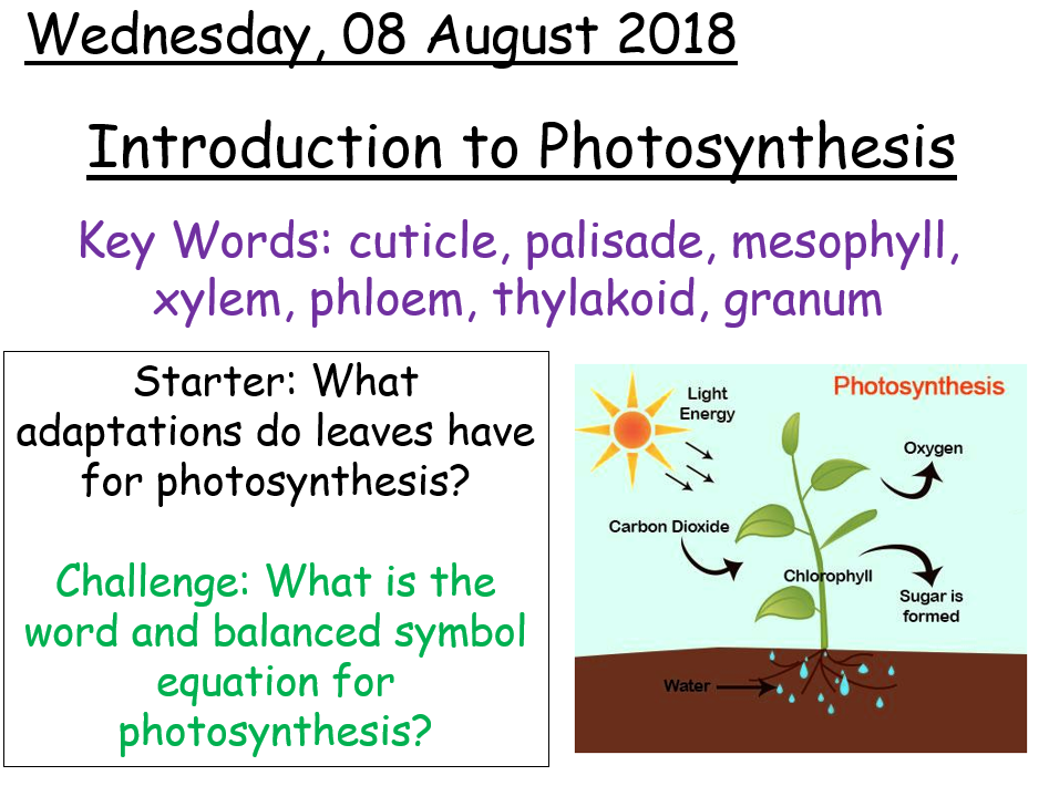 AQA A level Biology - Introduction to photosynthesis