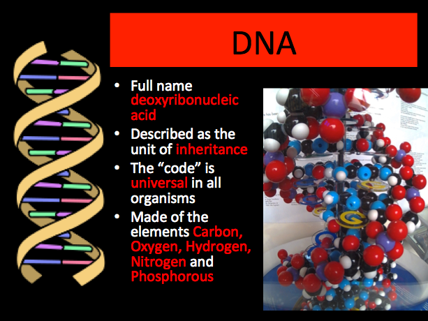 DNA Structure lesson plan and PowerPoint