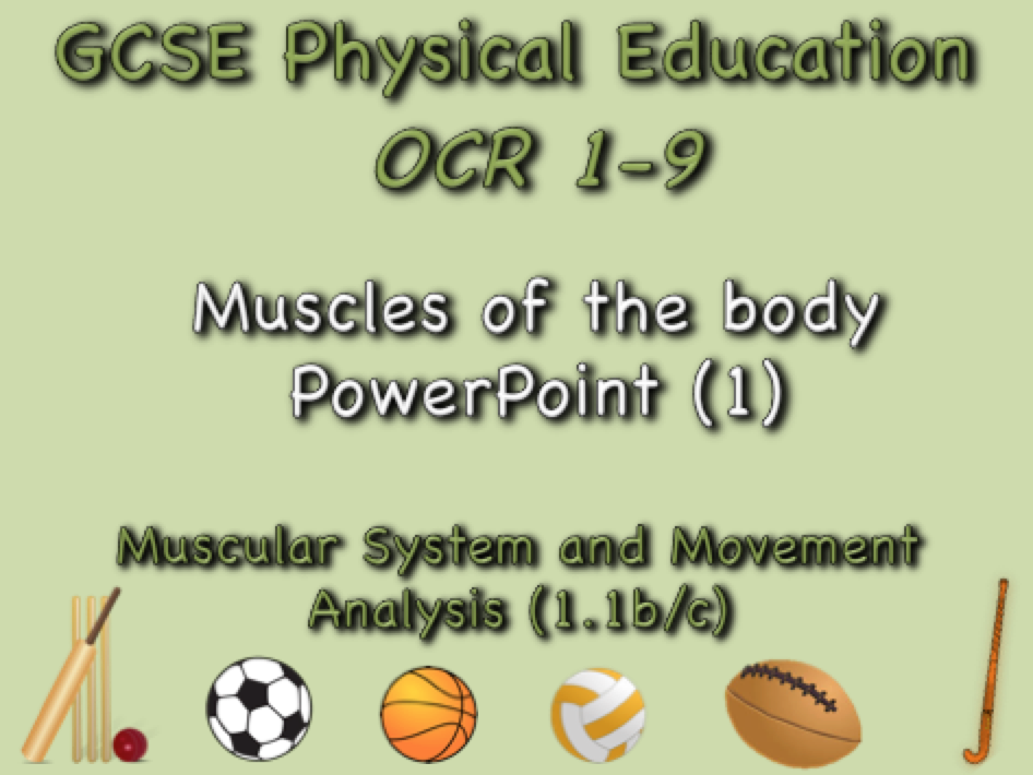 GCSE OCR PE  (1.1b/c) Muscular System and Movement Analysis  - Muscles of the body PowerPoint