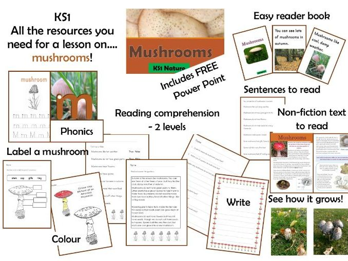 Mushroom lesson resources plus Power Point KS1