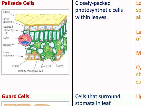 Specialised Plant Cells Table