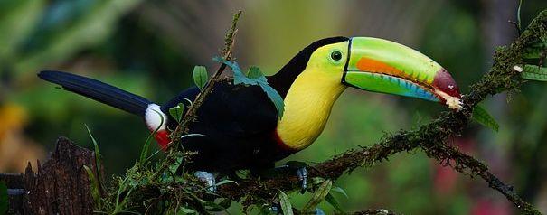 GCSE 9-1; Ecosystems case study - Value of  the Peruvian rainforests & human threats to biodiversity