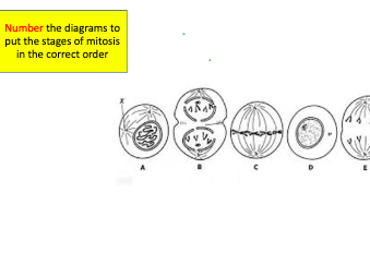GCSE AQA Science Biology 4.1 Mitosis and the cell cycle