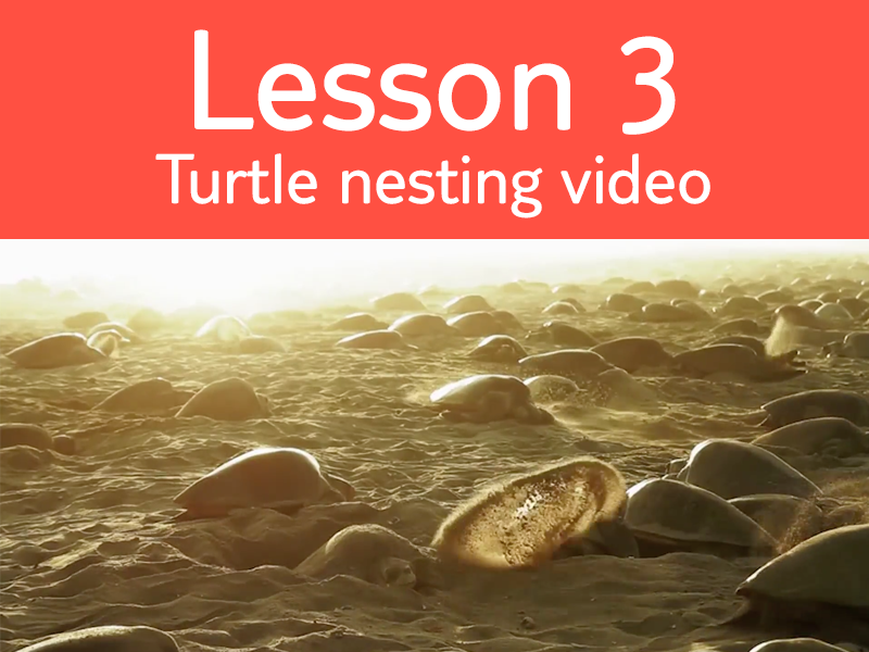 Lesson 3 - Activity 4: Turtle Nesting Video