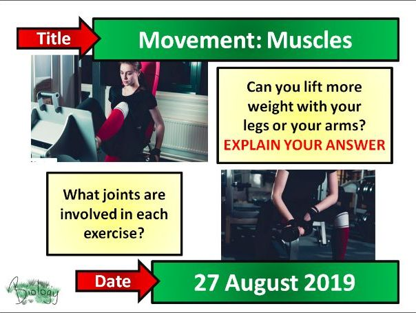 Movement  - Muscles - Activate