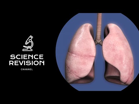 GCSE Science Biology (9-1) - The Lungs and Gas Exchange