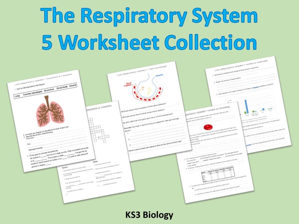 KS3 Science Respiration / Respiratory System Worksheets