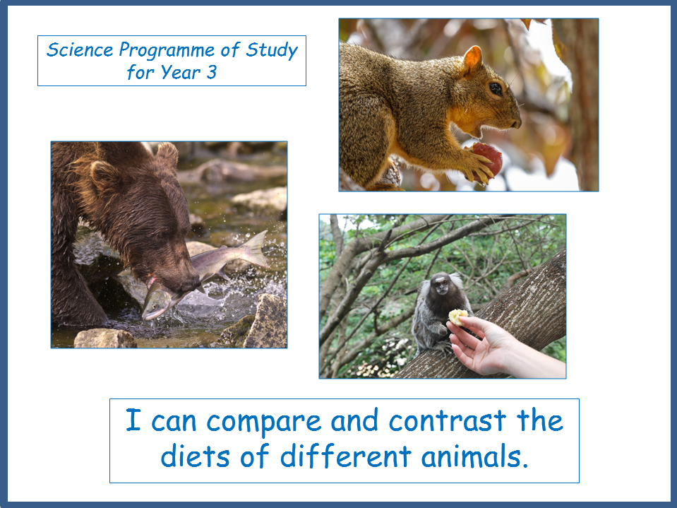Compare and Contrast the Diets of Different Animals