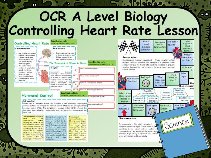 New OCR A2 Biology Controlling Heart Rate Lesson