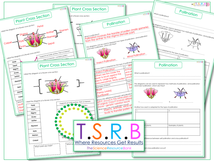 Plant Cross Section, Function and Pollination Worksheets. (Inc. Answers)