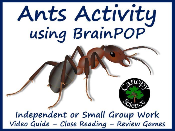 Ants Activity using BrainPOP