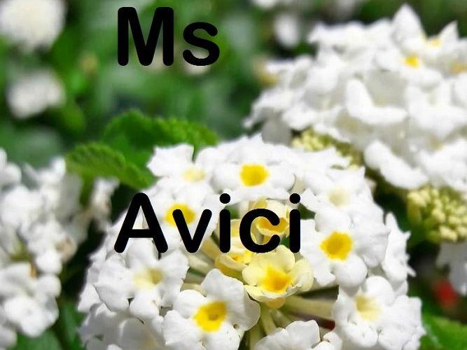 Flower, white, round