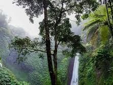 KS3 Tropical Rainforests