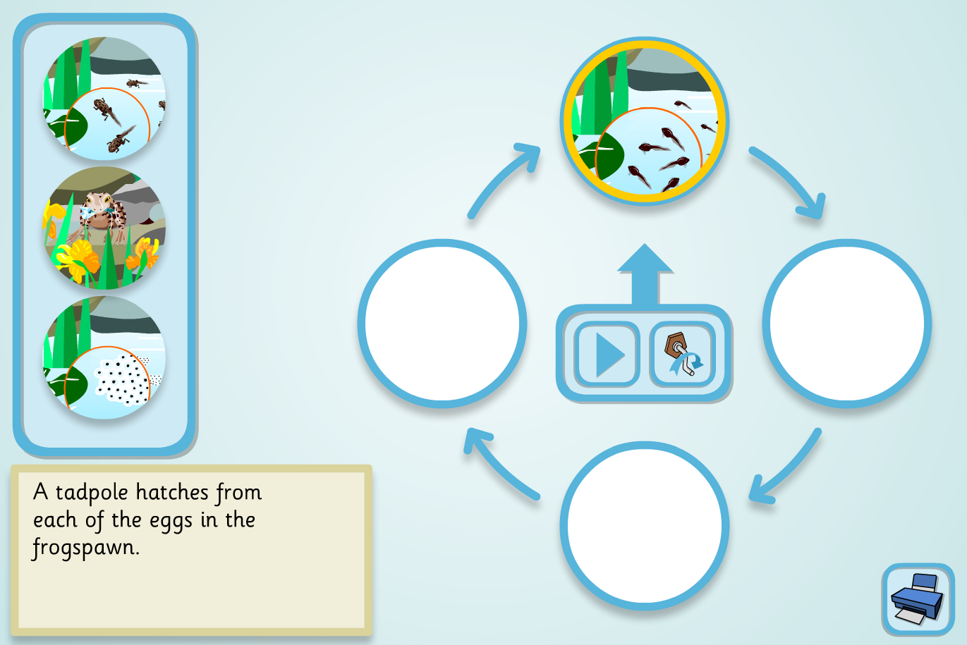 Frog Lifecycle Sequencer (Simple) - KS2 Literacy