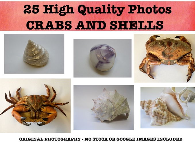 Crabs and Shells - Photo resource pack