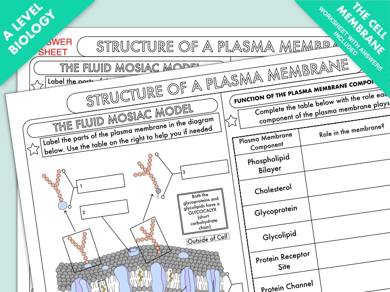 A Level Biology: Cell Membrane Structure Worksheet