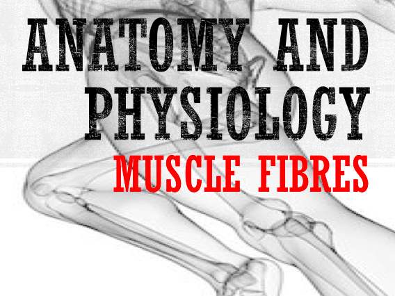 AQA A Level PE Anatomy and Physiology (Muscle Fibres) Powerpoint