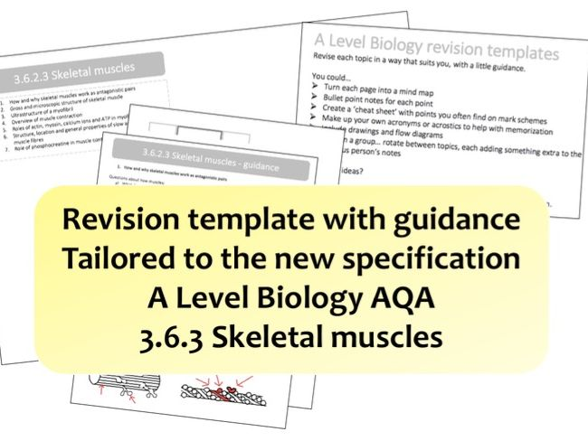 3.6.3 Skeletal muscles | NEW A Level Biology revision template with guidance | AQA