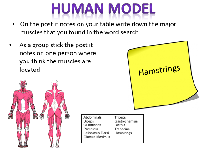 AQA GCSE PE Muscular System Lesson and Resources