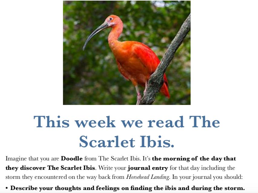 IGCSE English Paper 1 Q3 Practise - The Scarlet Ibis