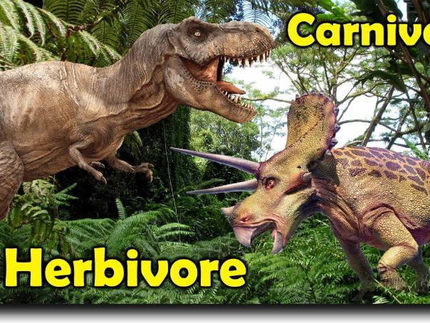 Dinosaurs Carnivores and Herbivores introduction and sorting activity