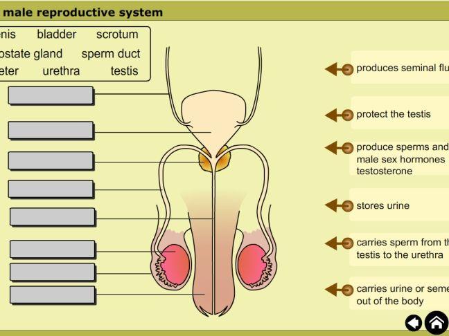 Development of Life Basic