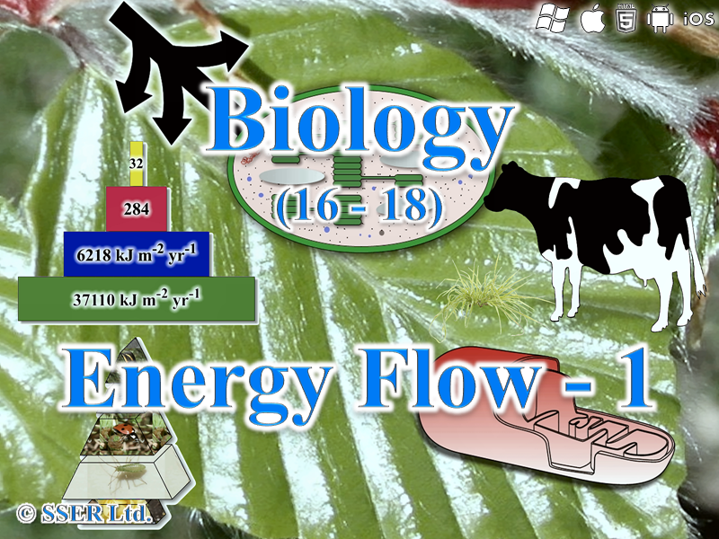3.5.3 Energy Flow - 1 (Ecosystems)