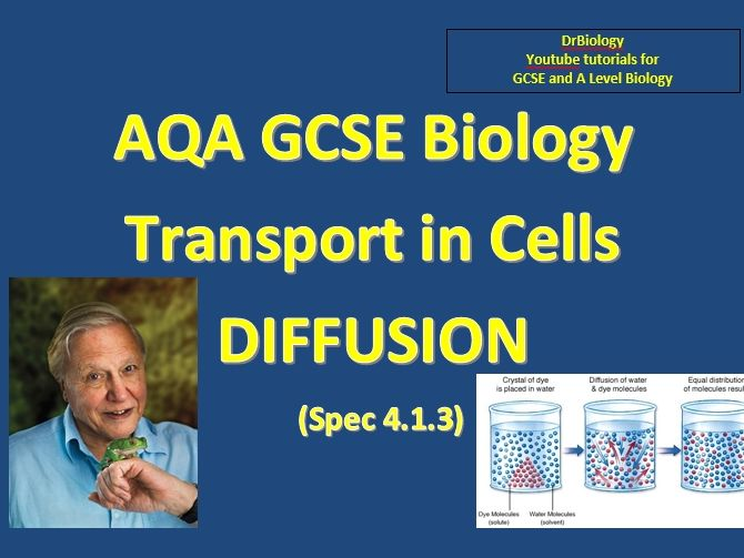 GCSE AQA Biology Diffusion and Exchange