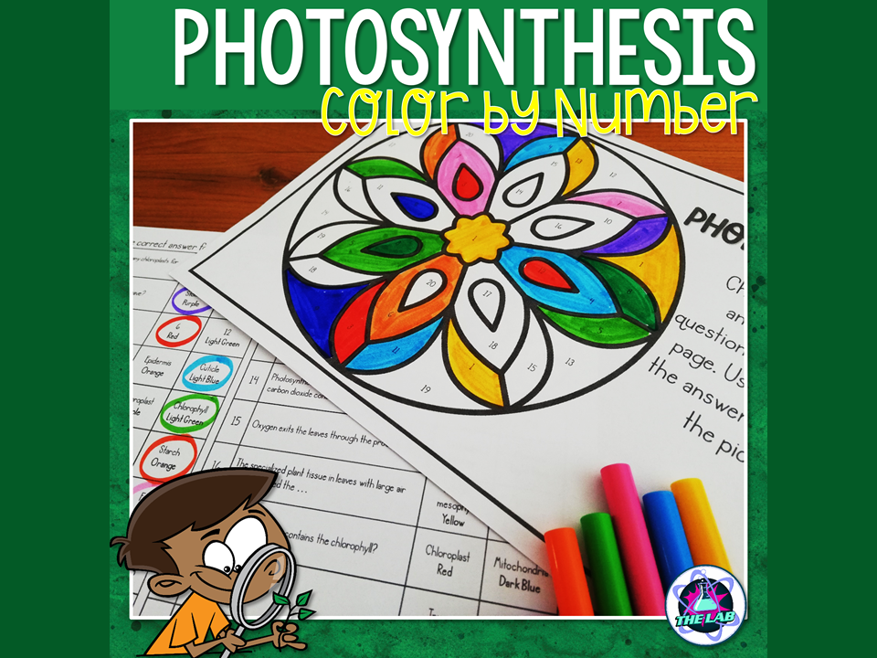 Photosynthesis Colour by Number Activity