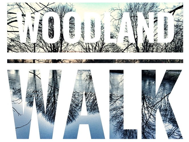 The Envionment.  Woodland Walk Video, Sound and Photographs