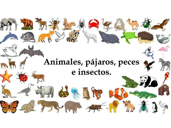 Distance Learning Special: Los animales salvajes (Nombres) -Minilesson Video+Activities