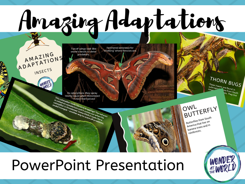 Insect Adaptations PowerPoint KS2