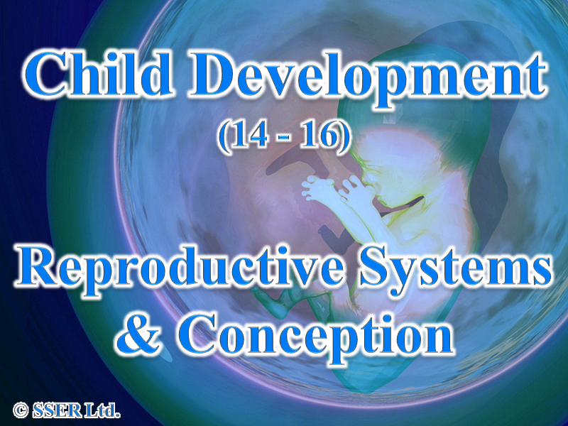 4.4 Child Development - Reproduction - Systems & Conception