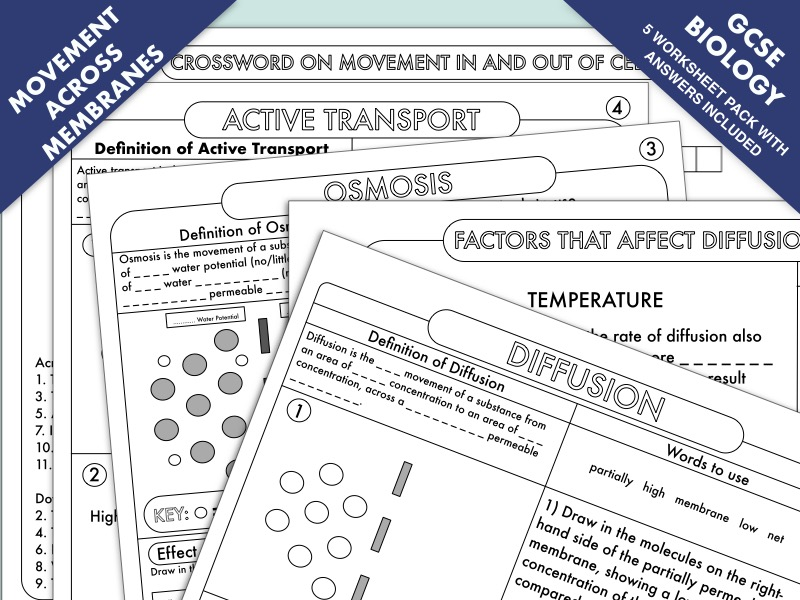 GCSE Biology: Diffusion, Osmosis and Active Transport Worksheet Pack