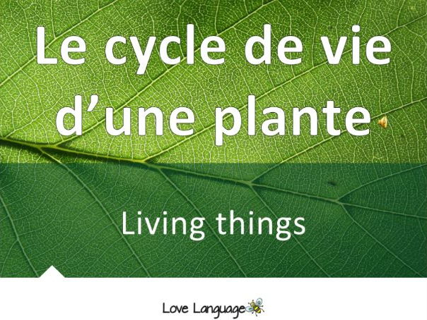 Life cycle of a plant in French - vocabulary