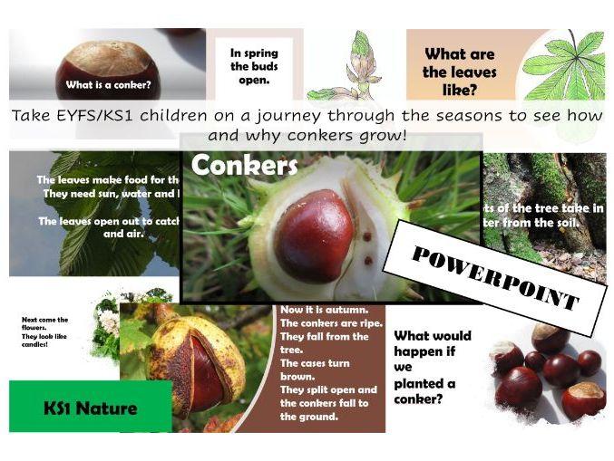 Conkers PowerPoint for EYFS/KS1