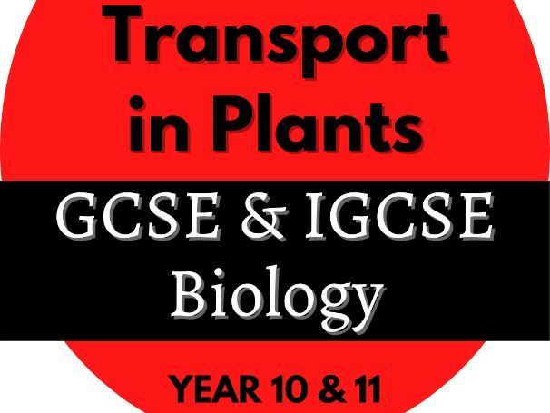 GCSE and IGCSE - Plant transport - Parts and their functions