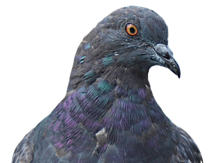 PROSE: PIGEON ENGLISH - STEPHEN KELMAN - Chapter 1, 2 (6 PAGES)